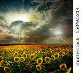 beautiful sunset over a field...   Shutterstock . vector #150465314