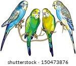 budgerigars australian... | Shutterstock .eps vector #150473876