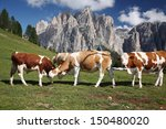 Cows Grazing In Mountain Pasture