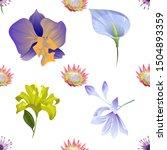Purple Osteospermum Daisybush....