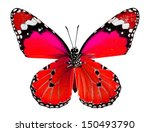 plain tiger butterfly in red... | Shutterstock . vector #150493790