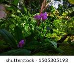 Little Beautilful Purple Flower ...