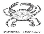 Chilean Blue Crab. Hand Drawing ...