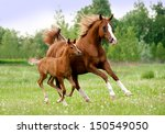 Stock photo arab mare and foal 150549050
