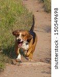 happy basset hound runs off...   Shutterstock . vector #150549698