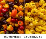 colorful peppers in the market  | Shutterstock . vector #1505582756