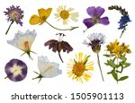 dry pressed flowers isolated on ... | Shutterstock . vector #1505901113