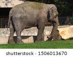 an elephant. the indian...   Shutterstock . vector #1506013670