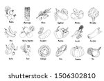 set of drawn colored vegetables.... | Shutterstock .eps vector #1506302810