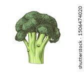 colorful hand drawn broccoli...   Shutterstock .eps vector #1506474020