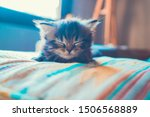 Stock photo  gray persian kitten sleeping on a colorful cushion 1506568889