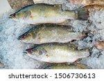 Raw barramundi fish on ice in...