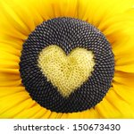 Sunflower Plant With Heart Fro...