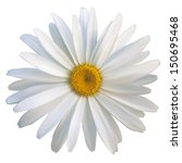 isolated daisy flower close up  ... | Shutterstock .eps vector #150695468