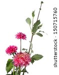Autumn Pink Flowers Isolated On ...