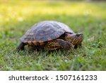 Turtle On The Grass Sunbathing...
