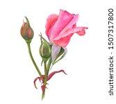 watercolor botanical  pink rose ... | Shutterstock . vector #1507317800
