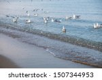 A Flock Of Large White Gulls...