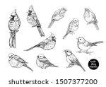 winter birds  tit bird  robin... | Shutterstock .eps vector #1507377200