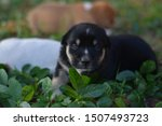 Stock photo one black puppy is in the garden cute puppy 1507493723