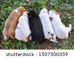 Stock photo four sleeping puppy cute puppy 1507500359