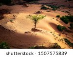 Small photo of Sun shining a spotlight over resilient tree growing in a little sand dune in a shadowy ravine on a sahelian plateau with refresehd vegetation during summer rainy season outside Niamey capital of Niger