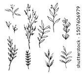 sketch botanical  several types ... | Shutterstock .eps vector #1507606979