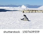 Leopard Seal And Emperor...