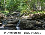 Trout stream in the Appalachian Mountains
