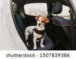 Cute Small Jack Russell Dog In...