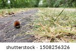 centipede or insect, a bug tries to cross the road smaller than the grass, probably go get to the other side