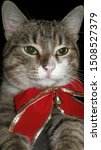 Cat Lying With A Big Red Bow...