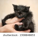 Stock photo black fluffy kitten in hands 1508848853