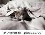 Grey Cat In Grey Linen Bed...