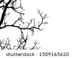 silhouette of a leafless tree... | Shutterstock . vector #1509165620