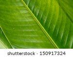 green leaves texture | Shutterstock . vector #150917324