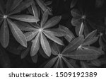black and white leaves closeup | Shutterstock . vector #1509192389