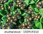 beautiful background. | Shutterstock . vector #150919310