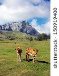 young brown calves on mountain... | Shutterstock . vector #150919400