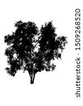 tree silhouettes beautiful... | Shutterstock . vector #1509268520