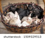 Stock photo selective focus a white kitten lying with many kittens in bamboo basket on wood texture background 1509329513
