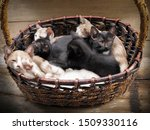 Stock photo selective focus a black kitten lying with many kittens in bamboo basket on wood texture background 1509330116
