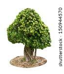 tree on ground on white... | Shutterstock . vector #150944570