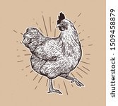 Chicken Hand Drawn Illustration....