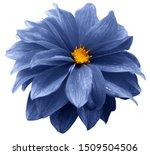 Blue  Dahlia. Flower On A White ...