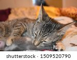 Stock photo mother cat grooming her newborn kitten 1509520790