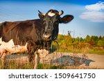 Village Scene Cows Returning...
