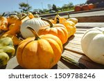 Big Orange Pumpkin Harvest  ...