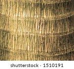 Palm Tree Trunk Detail