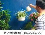 Asian Man Watering Plant At...